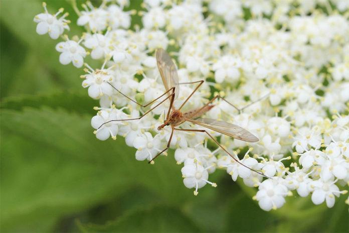 Φτιάξτε 'Πράσινα' Απωθητικά Εντόμων με Λουλούδια